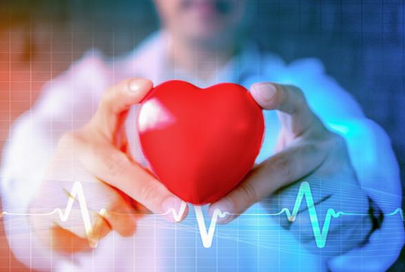 Quercetin and Cardiovascular Disease