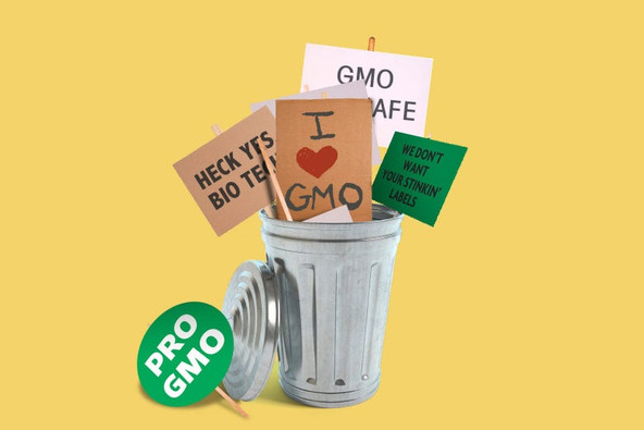 Removing Genetically-Modified Food Helps Many Health Problems