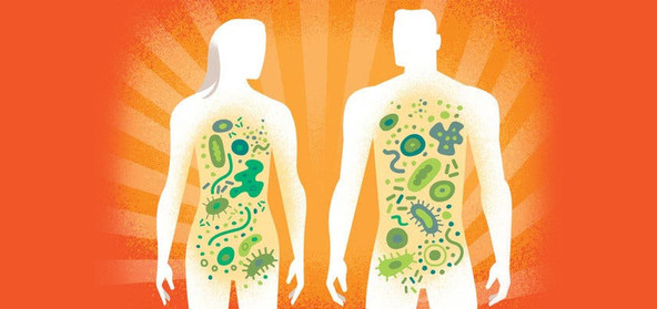 The Multiple Assaults on our Microbiomes