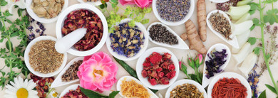 The Naturopathic Approach to Good Health