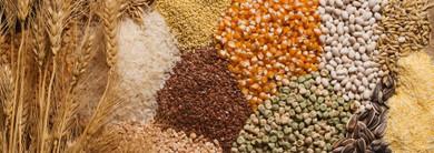 Ancient Grains for Modern Health