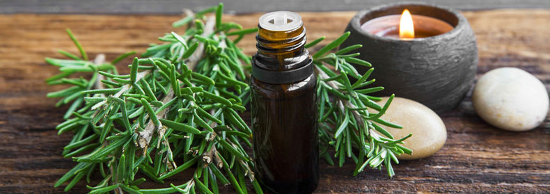 Herb of the Month: Rosemary
