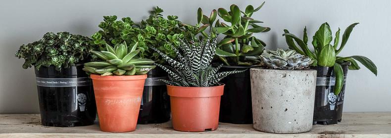 8 Indoor Plants To Help You Sleep Better