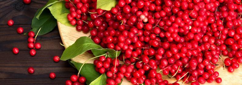 Herb of the Month -  Schisandra (Schisandra chinensis)