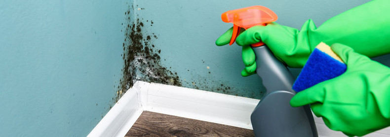 Managing Mould With Natural Products