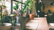 Which plants can actually clean the air in my home?