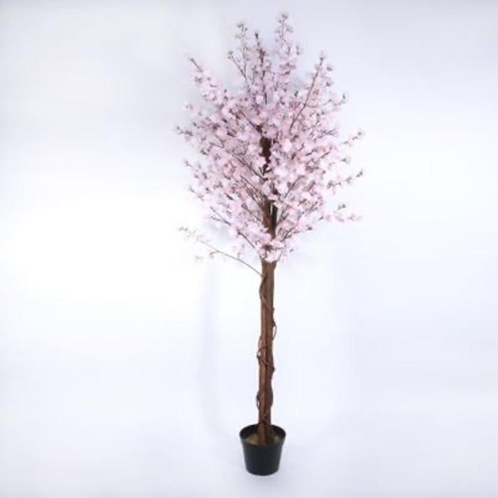2 Cherry Blossom Pink rental