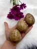 Aragonite Eggs