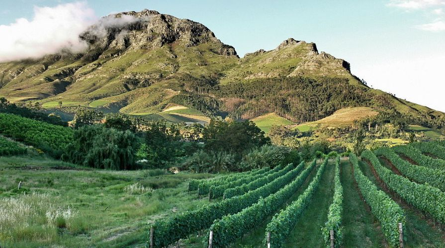 stellenbosch-vineyards.jpg