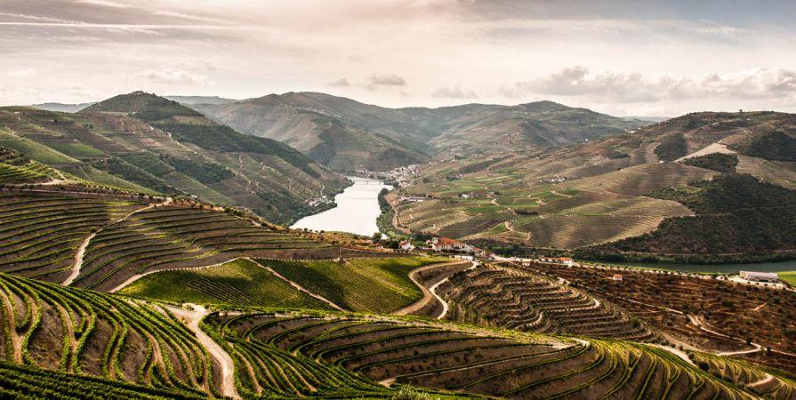 the-douro-valley-vineyards.jpg