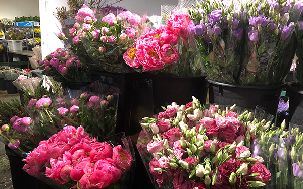 assortment of flowers to select