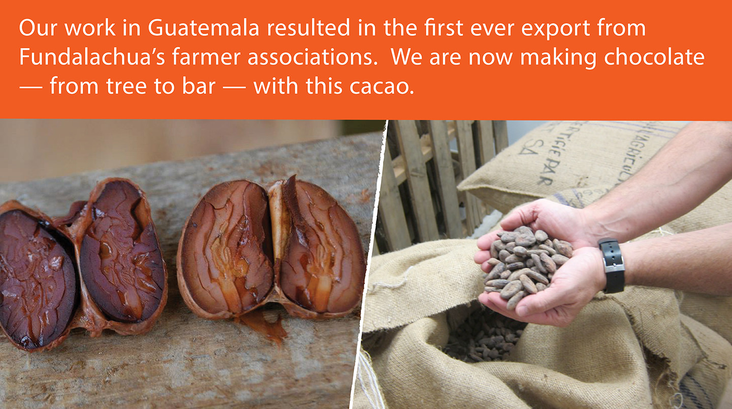 cut cocoa beans direct from Guatemala