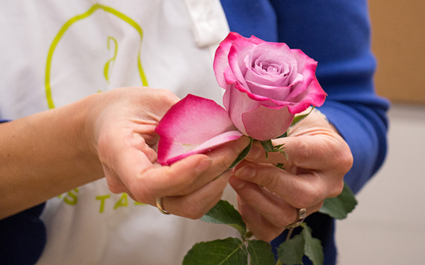 removing guard petals from a rosee
