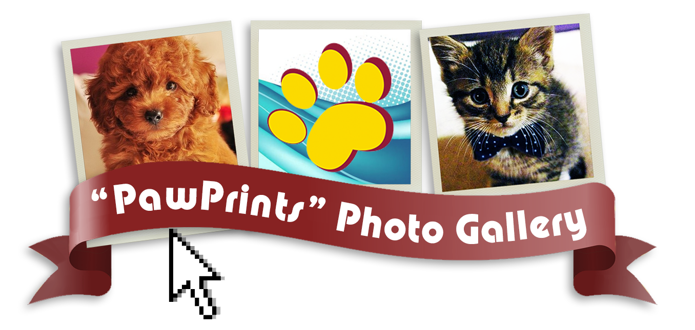 pawprintsphotogallery.png