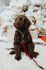 Draper Buffalo Plaid Dog Leash