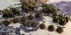 32mm Squad Trays