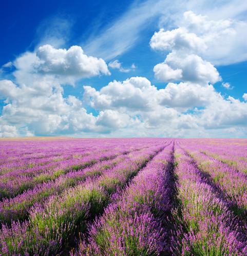 Provence Trip 普羅旺斯