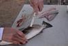 """8"""" fillet knife in action"""