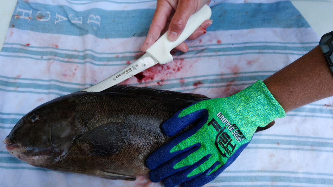 """Dexter curved 6"""" boning knife"""