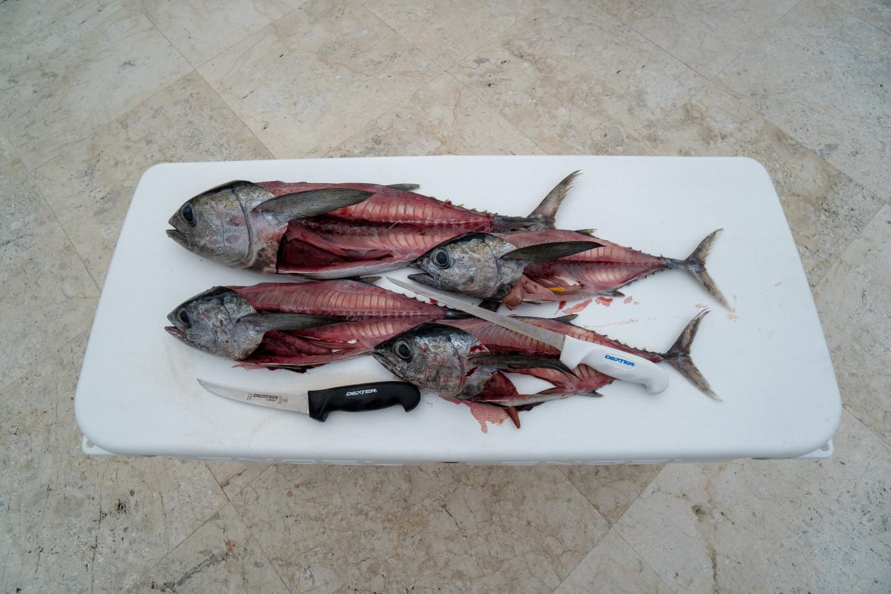 Dexter Outdoors SG133-9 skinning the tuna