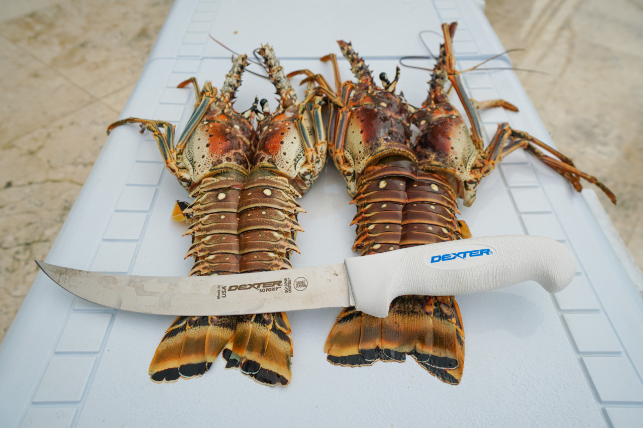 Lobster splitting not a problem for the SG132N-8
