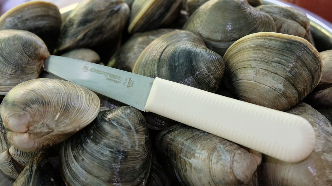 The Dexter S129 with shuck this load of clams with ease