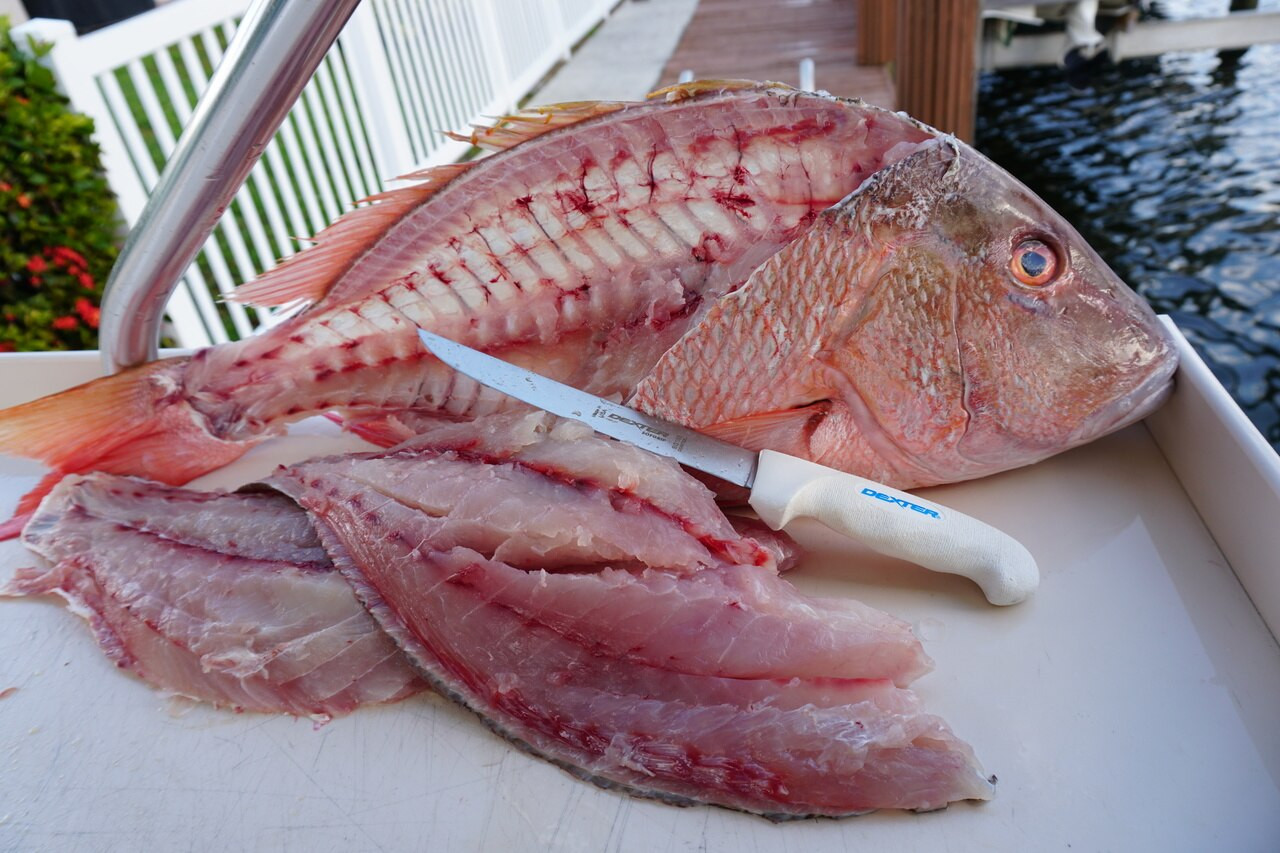 the SG138  does a great job on this Red Snapper