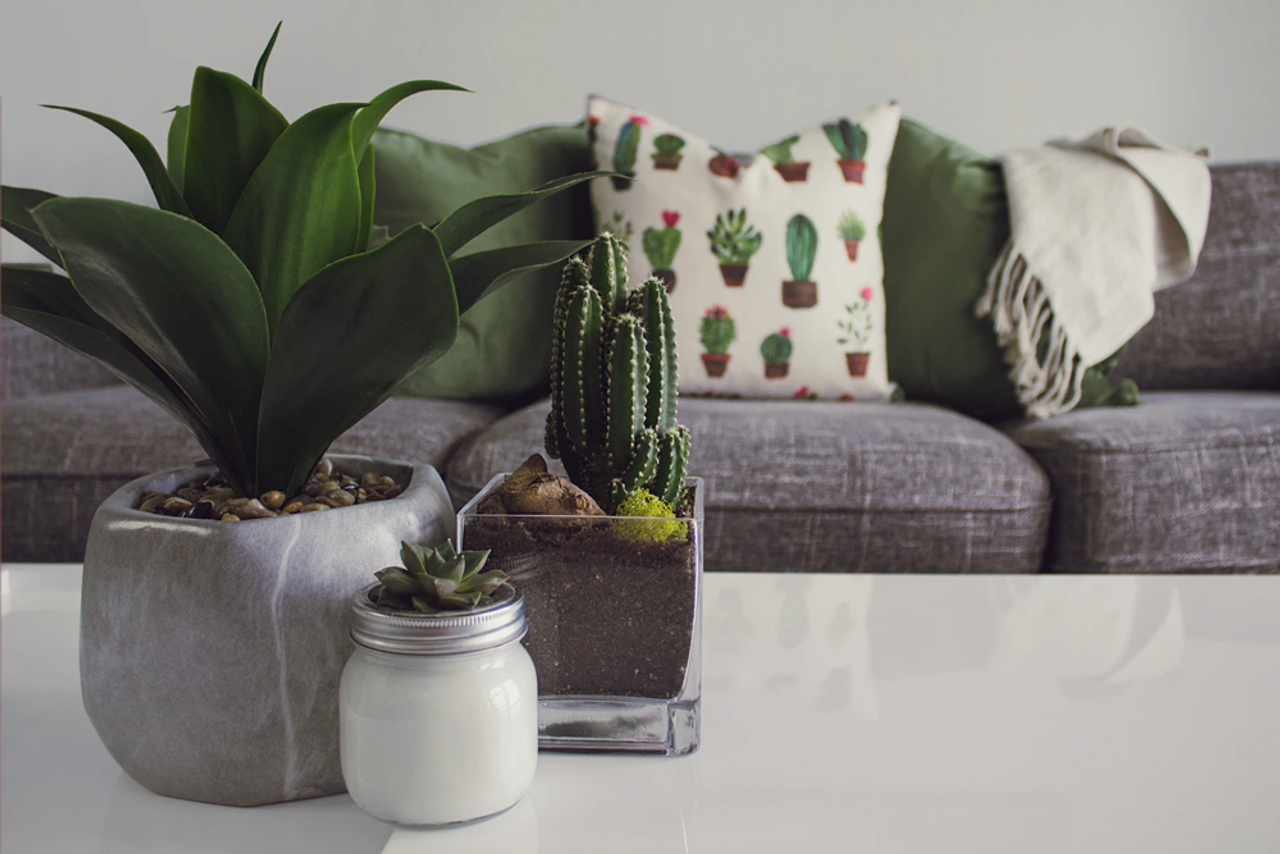 Bloom Where You're Planted: Spring Home Decor for Every Space