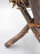 twig stand with bird nest