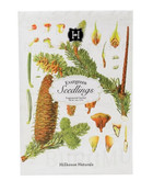 Evergreen-Seedlings Sachet