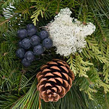 blueberries, moss, and pine cone close up