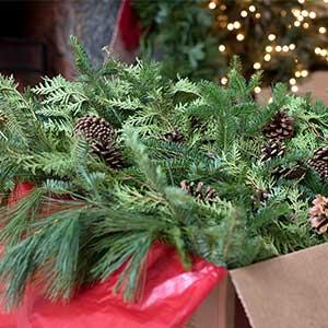 Shop mixed Christmas greens of balsam, cedar, and pine