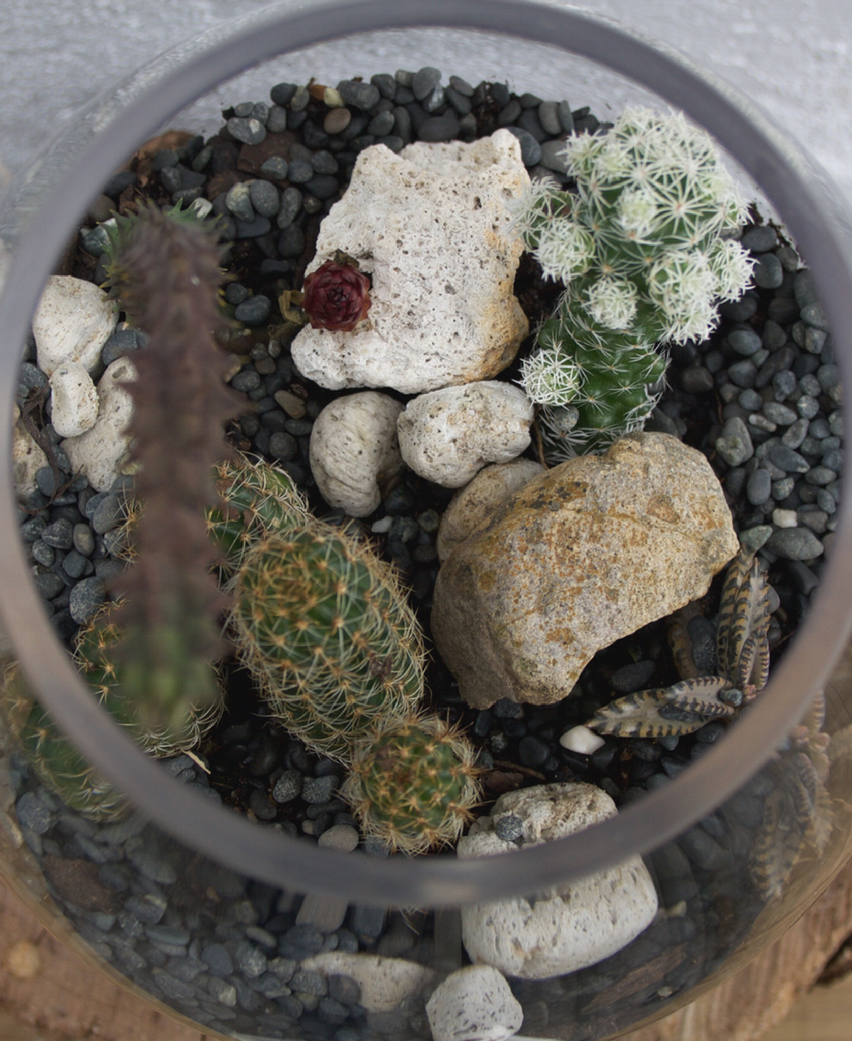 Plants   |    Terrariums    |    Wreaths