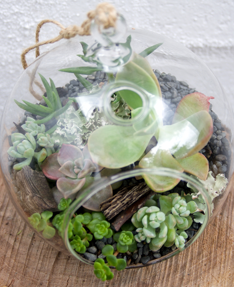 Terrarium Hanging Ball