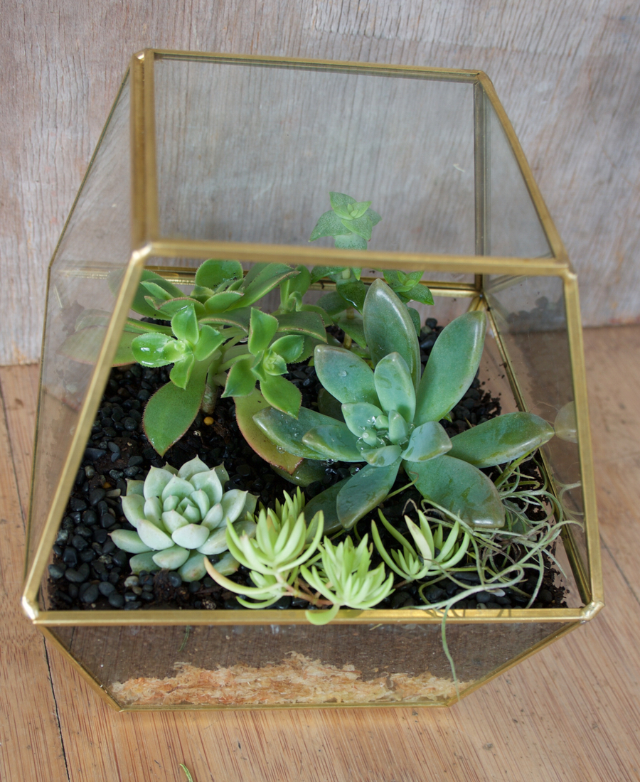 Terrarium in geometric brass shape