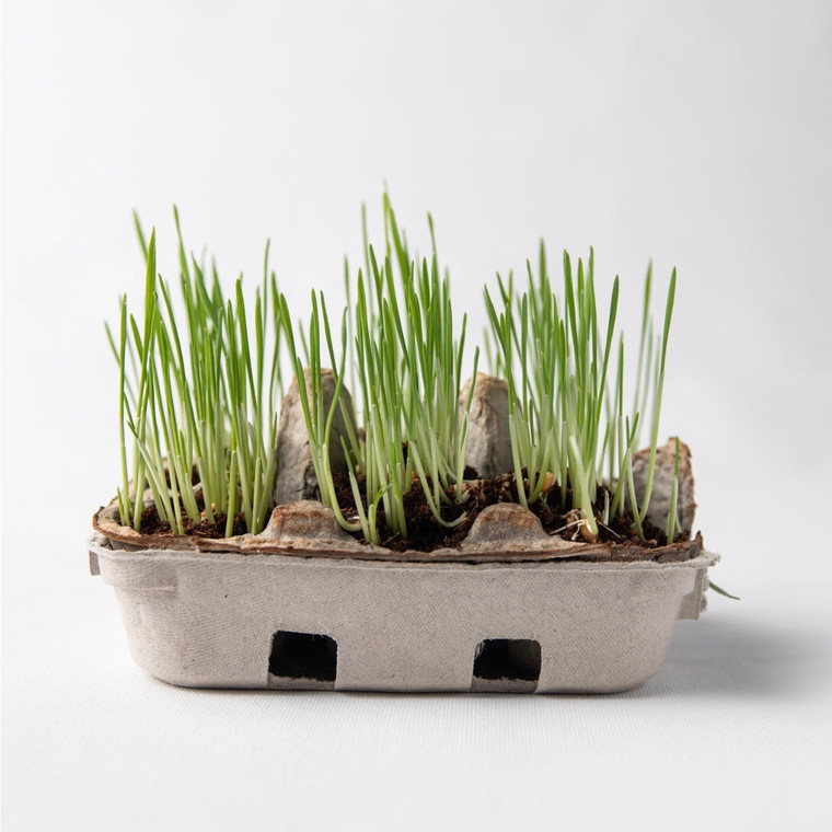 Egg Coloring and Spring Grass Growing Kit