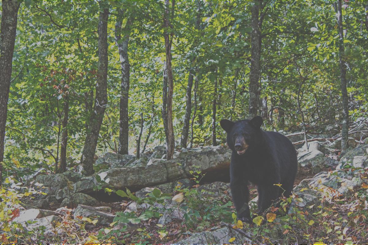 bear-cover-photo.jpg