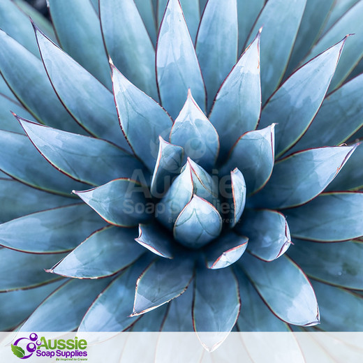 Blue Agave Fragrance