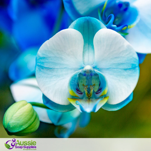 Enchanted Orchid (Type) Fragrance