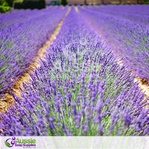 Australian Lavender Fragrance *In Stock