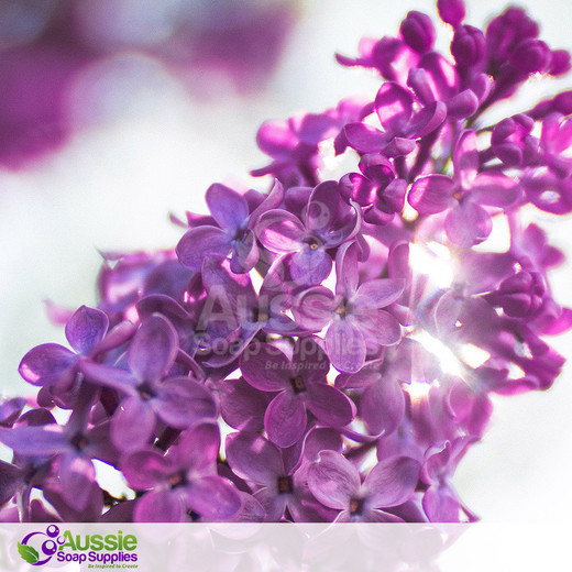 Luscious Lilac Fragrance