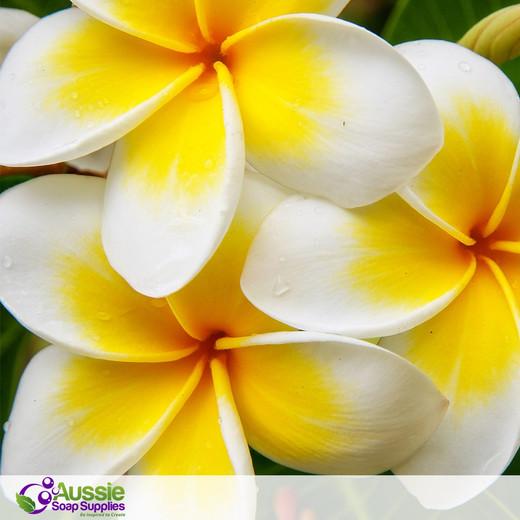 Plumeria  Fragrance (Type)