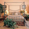 Rose Bud Wrought Iron Canopy Bed
