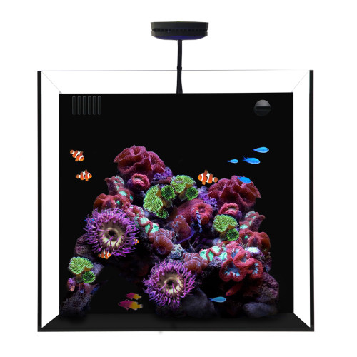 CUBE 20 Waterbox Aquarium