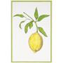 Flour Sack Kitchen Towel - Lemon Design, Set of 2