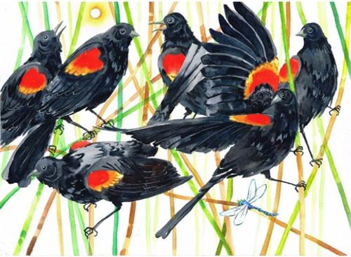 Red-Wing Blackbird Print