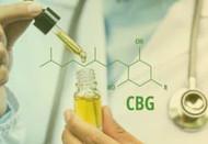 Cannabinoid Crash Course: CBD, CBG, CBN, and THC