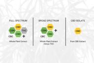 Types of CBD: Full Spectrum, Broad Spectrum and Isolates