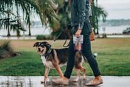 Types of CBD Pet Products