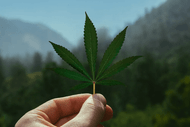 What Are CBD Concentrates?